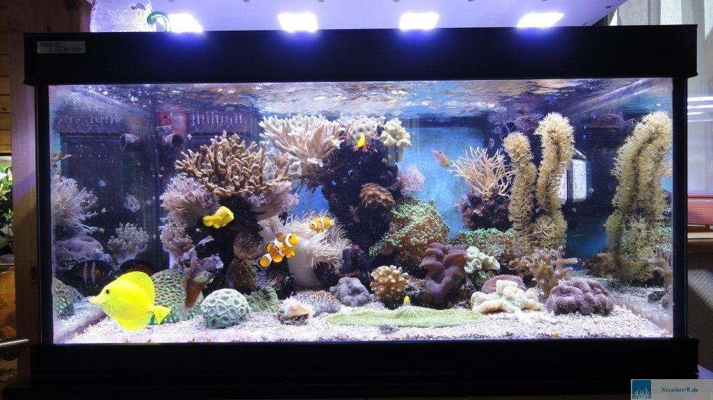 entwicklung eines meerwasseraquariums unter der led beleuchtung von. Black Bedroom Furniture Sets. Home Design Ideas