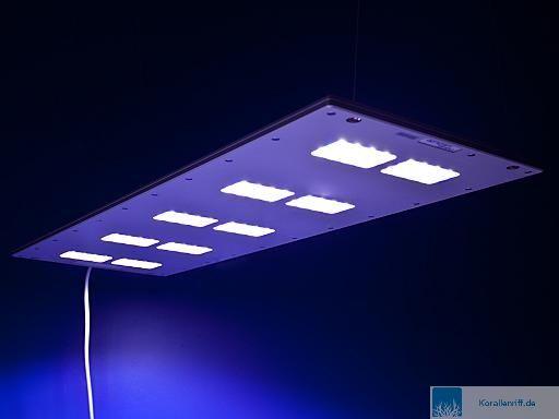 Entwicklung eines Meerwasseraquariums unter der LED-Beleuchtung von ...