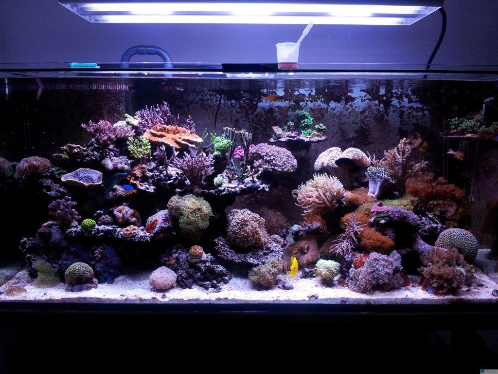 arcadia marine hybrid t5 lampe 80 watt meerwasser aquarium korallen fisch 1450mm smash. Black Bedroom Furniture Sets. Home Design Ideas