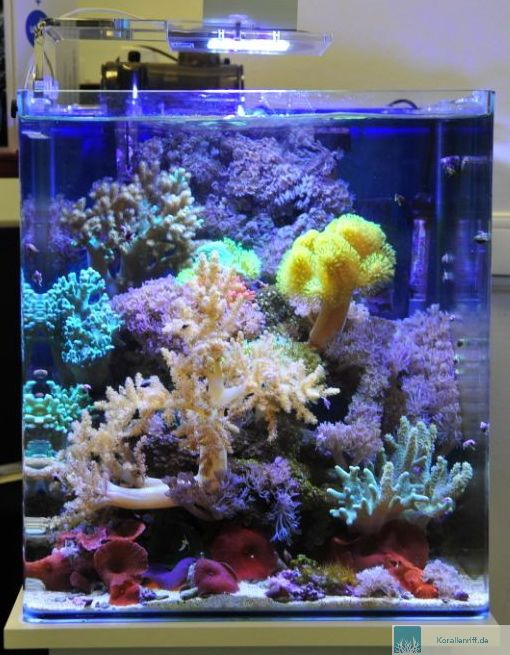 aquarioscenario asc gibt besatzempfehlungen f r nano. Black Bedroom Furniture Sets. Home Design Ideas