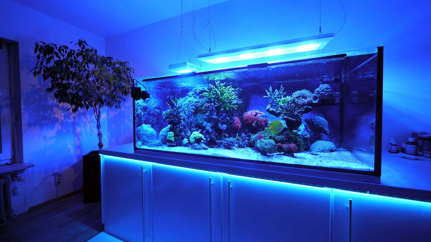 das 770 liter meerwasser aquarium von matthias sch tt. Black Bedroom Furniture Sets. Home Design Ideas