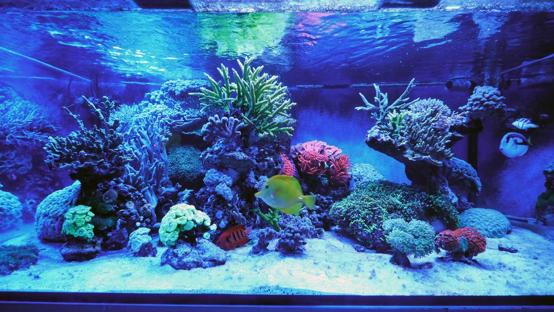 das 770 liter meerwasser aquarium von matthias sch tt www. Black Bedroom Furniture Sets. Home Design Ideas