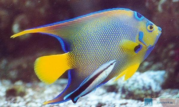 Fischaquarium pflegeleicht oder for Salzwasser aquarium fische