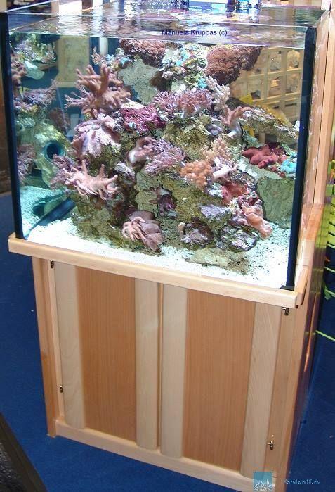 Einkaufsliste f r den start mit einem meerwasseraquarium for Salzwasser aquarium