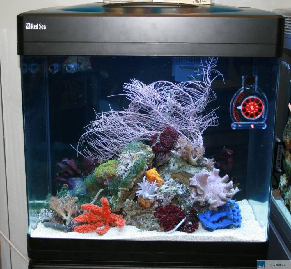 nano aquarium incl zubeh r aus acryl f r s und. Black Bedroom Furniture Sets. Home Design Ideas