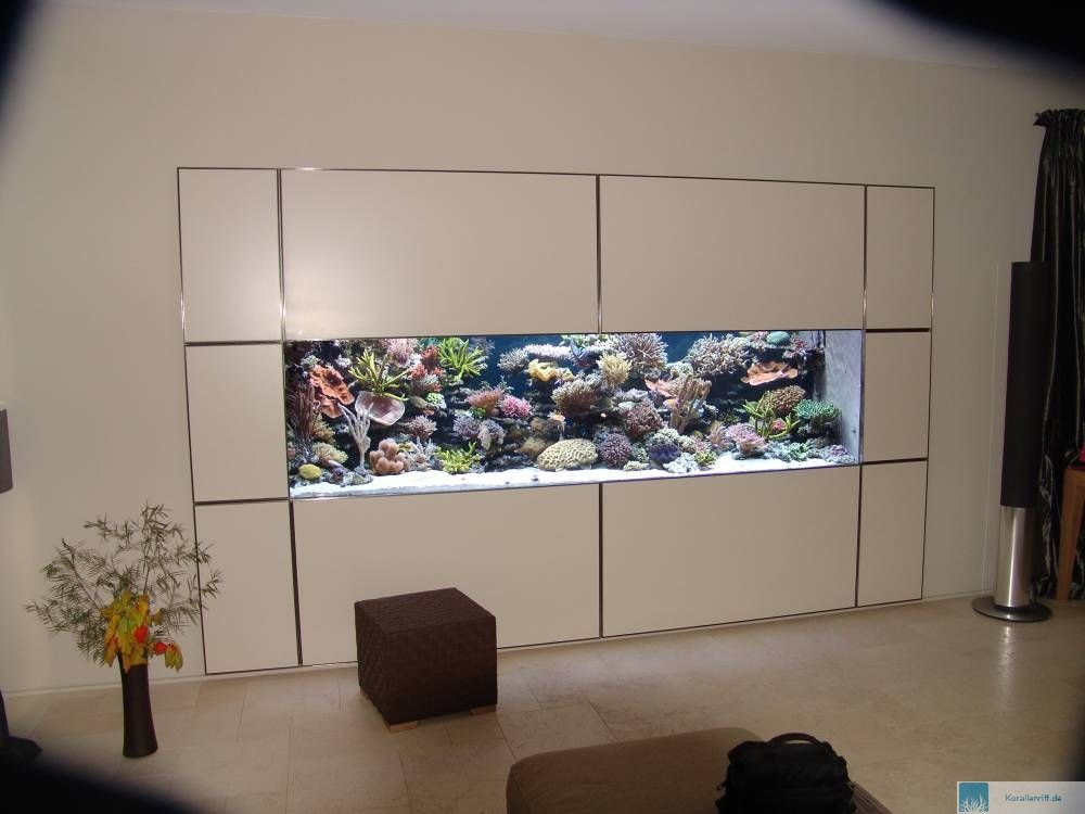 das aquarium des monats januar 2008. Black Bedroom Furniture Sets. Home Design Ideas