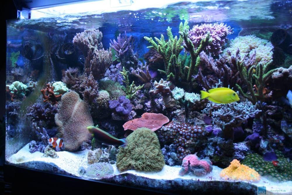 Vorstellung zur auswahl des aquarium des monats m rz 2008 for Salzwasser aquarium fische