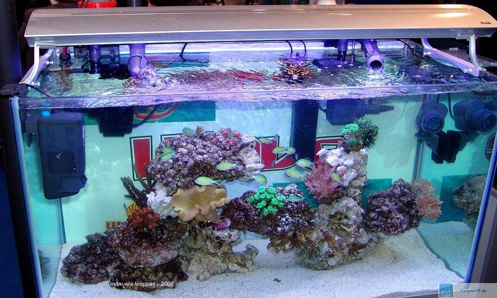 Meerwasser einstiegtips kurzfassung for Salzwasser aquarium fische