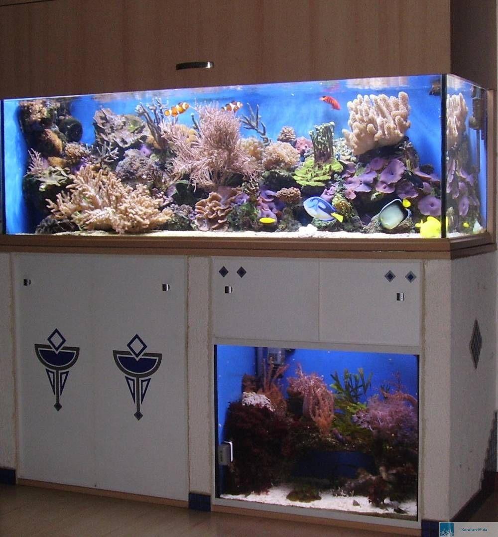 vorstellung der aquarien f r das aquarium des monats. Black Bedroom Furniture Sets. Home Design Ideas