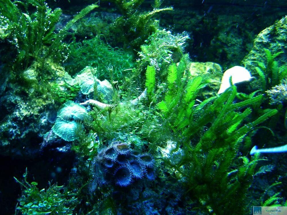 Das nanoriff algen for Welche tiere fressen algen im teich