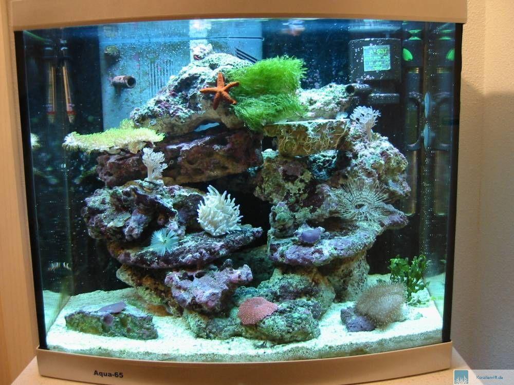 vorstellung der aquarien f r das aquarium des monats juni 2008. Black Bedroom Furniture Sets. Home Design Ideas
