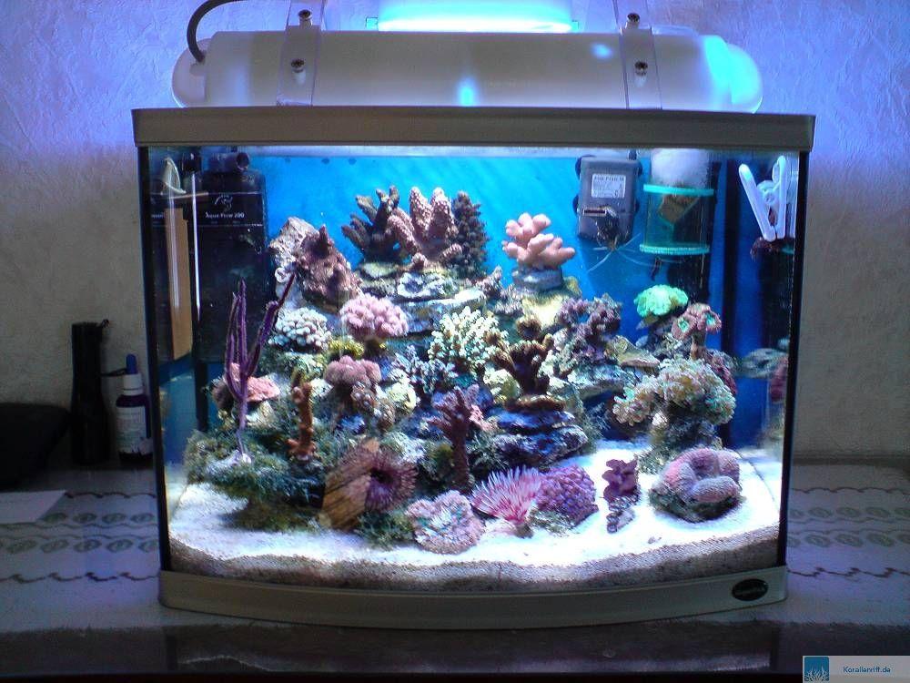 Vorstellung der Aquarien f u00fcr das Aquarium des Monats  Juni 2008 www korallenriff de