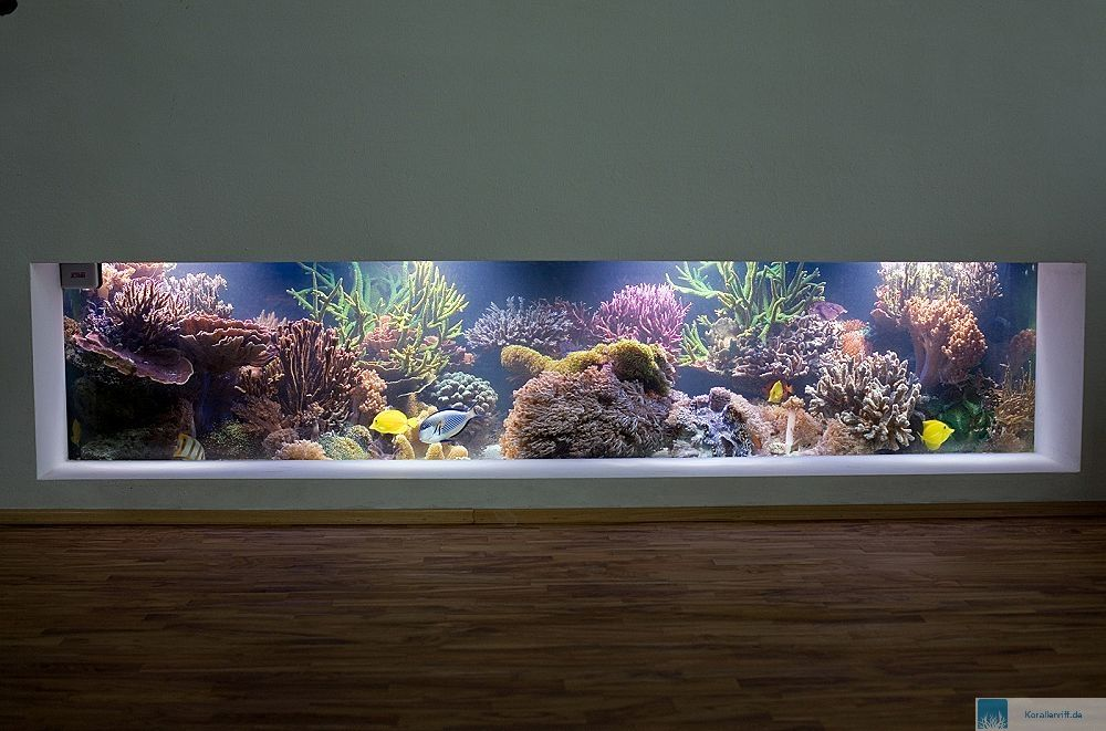 aquarium trennwand midwest tropical aquarium end table gallon freshwater acrylic with aquarium. Black Bedroom Furniture Sets. Home Design Ideas
