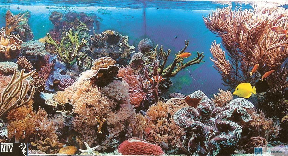 Das Meerwasseraquarium   Von der Planung bis zur erfolgreichen Pflege www korallenriff de
