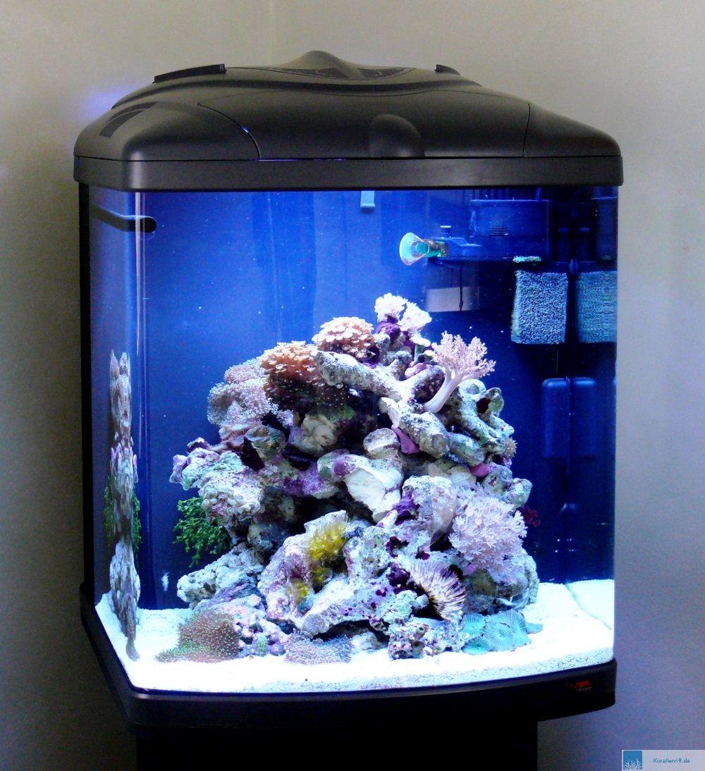 Aquarium Einsteiger  Wie richtet man ein aquarium zuhause bei sam?