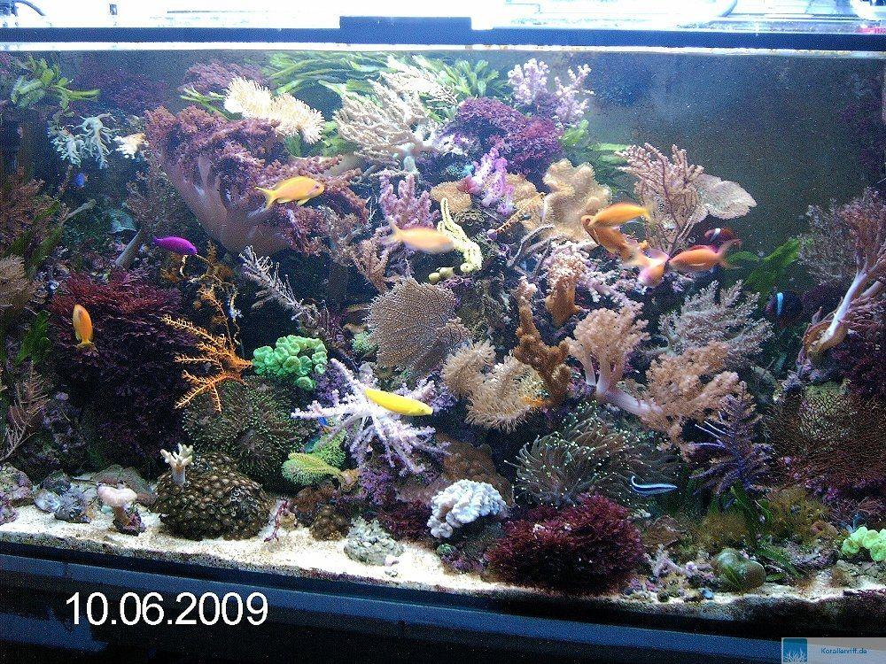 das aquarium des monats mai 2009 thema spezialbecken www. Black Bedroom Furniture Sets. Home Design Ideas