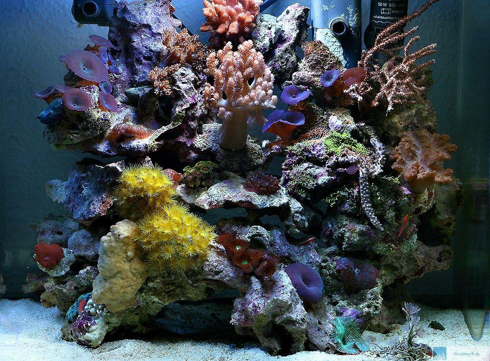 nano aquarium fische meerwasser zuhause image idee. Black Bedroom Furniture Sets. Home Design Ideas