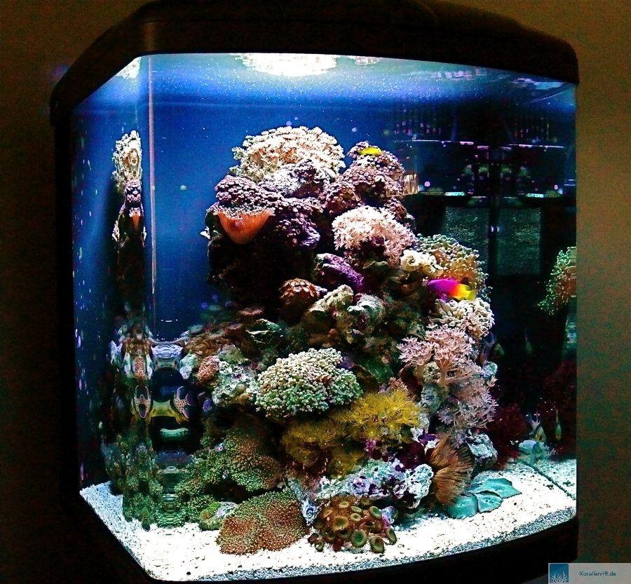 Mein sera biotop cube 130 nach 18 monaten standzeit www for Sera acquari
