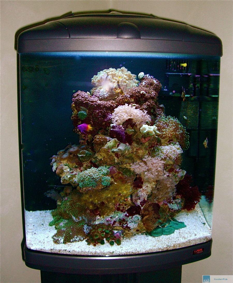 salzwasser aquarium für anfänger