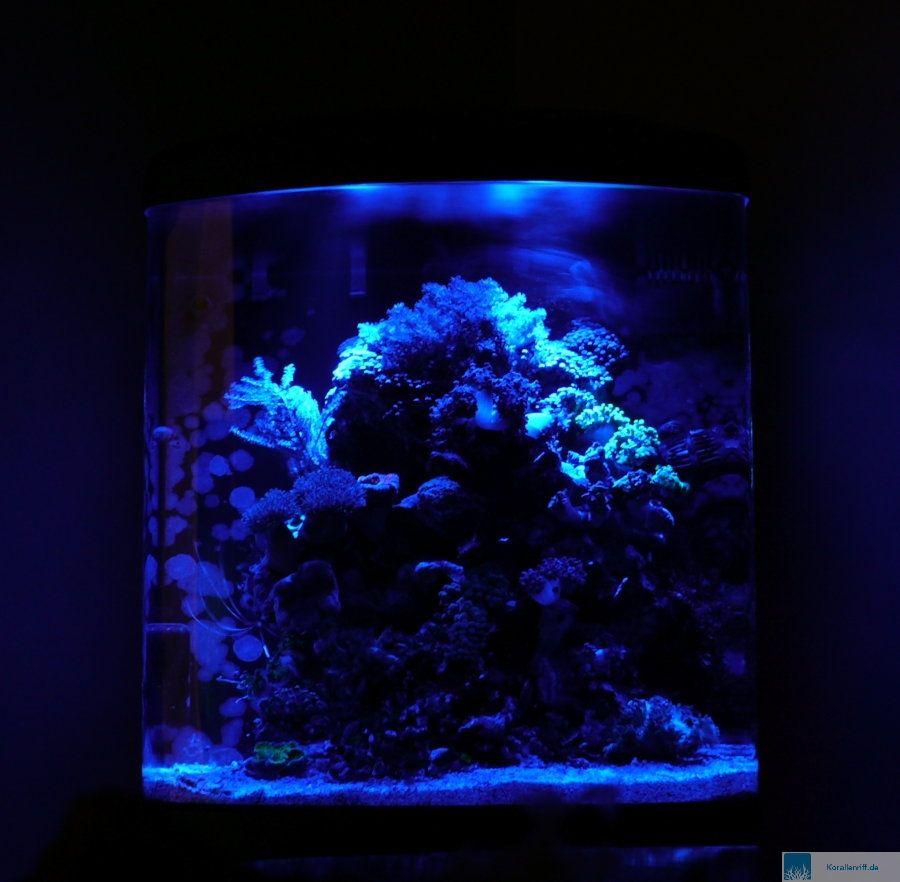 mein sera biotop cube 130 nach 18 monaten standzeit www. Black Bedroom Furniture Sets. Home Design Ideas