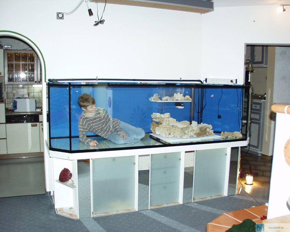 Unser neues Meerwasseraquarium – Ein Traum wird zum Alptraum! www ...