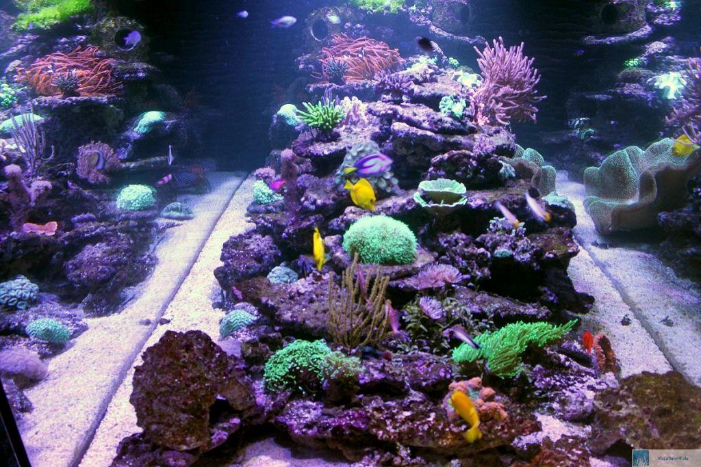 dokumentation des wachstums der korallen unter giant flash. Black Bedroom Furniture Sets. Home Design Ideas