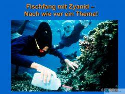 """Interview """"Zierfischhandel"""" - Heute & Morgen mit Meeresbiologin Christiane Schmidt 1"""
