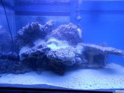 lichtrasterplatte aquarium gel nder f r au en. Black Bedroom Furniture Sets. Home Design Ideas