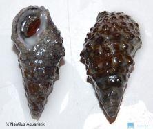 Neue wunderschnecken gegen kieselalgen und for Welche teichfische fressen algen