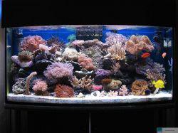 Das aquarium des monats juli 2008 for Salzwasser aquarium fische