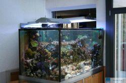 wechsel von s wasser auf meerwasser aquaristik. Black Bedroom Furniture Sets. Home Design Ideas
