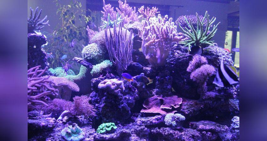 Fische & Aquarien Aquarium Einen Effekt In Richtung Klare Sicht Erzeugen