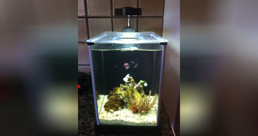 Aquarium Beleuchtung Welche Lichtfarbe | Das Nanoriff Aquarium Von Thomas