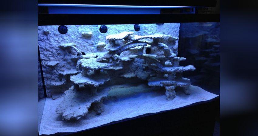 Aquarium Einen Effekt In Richtung Klare Sicht Erzeugen Fische & Aquarien