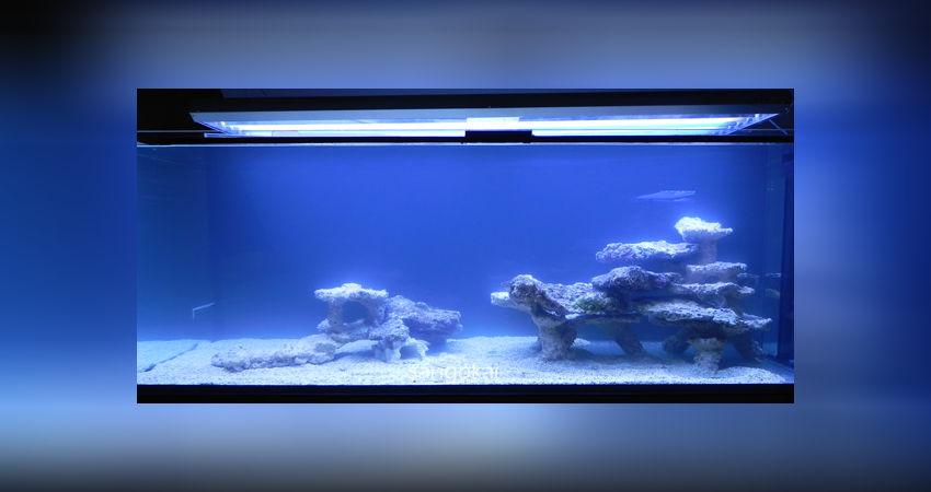 Aquarium Einen Effekt In Richtung Klare Sicht Erzeugen Aquarien