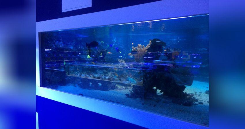 Aquarium Laden Köln