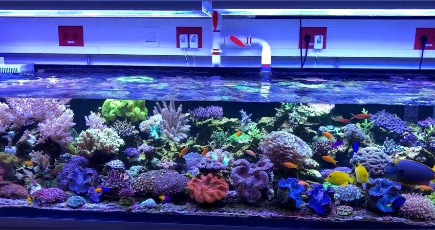Hausbesuche - Das 1.500 Liter Meerwasser Aquarium von