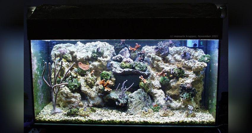 aquarium steine gro aquarium dekoration komplettset steine pflanzen moorkienwurzel kg dragon. Black Bedroom Furniture Sets. Home Design Ideas