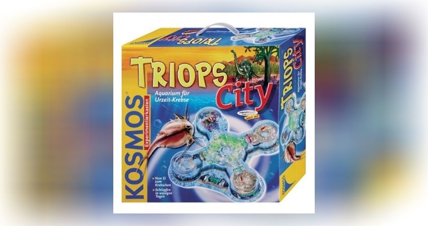 Triops Und Der Versuch Sie Zu Zuchten