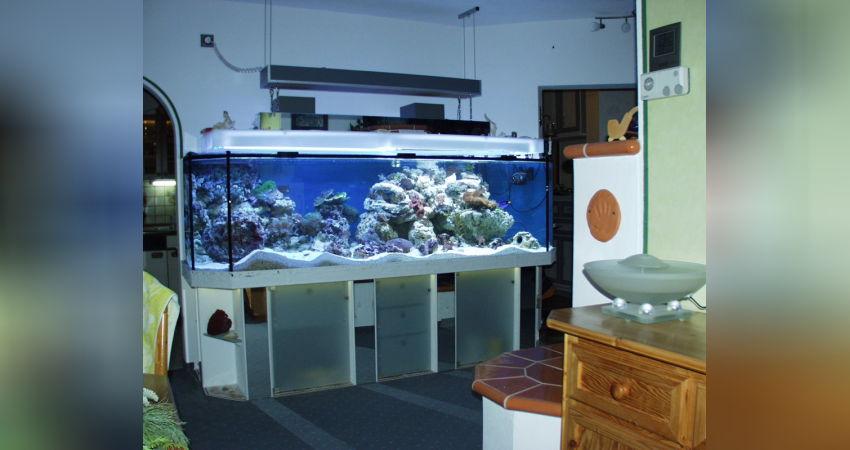 Unser neues Meerwasseraquarium – Ein Traum wird zum Alptraum!